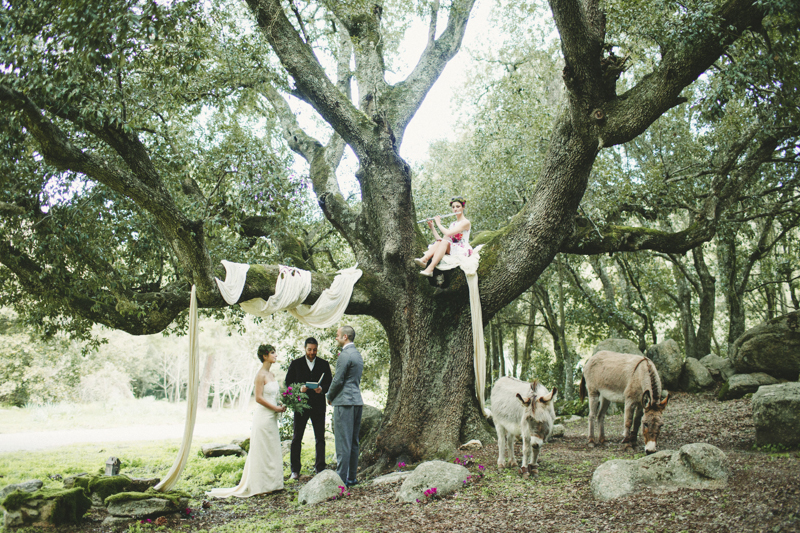 the ceremony under a old beautiful tree